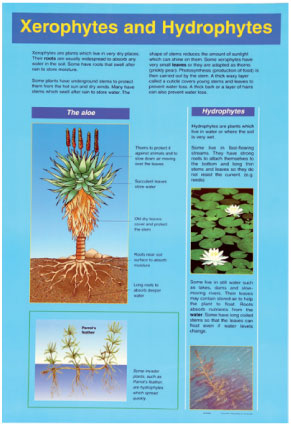 Xenophytes & Hydrophytes – Minimum Total Order of 5 for Any of the A1  Laminated Posters! | Promoni's